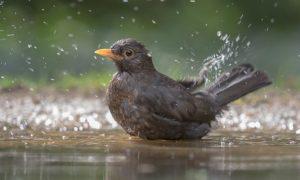 Hoe vogels gingen zingen (106)