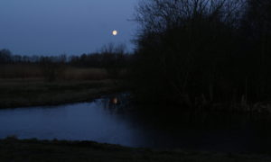 De slechtvalk en de maan. Hoe de MAAN haar staart kwijtraakte (103)